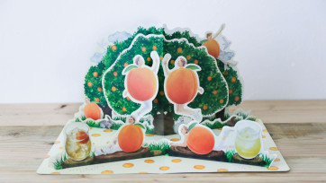 杏露酒 / Apricocca